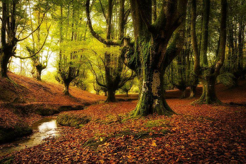 Foresta di Otzarreta, Spagna