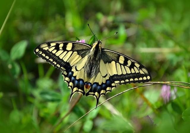 farfalle zoo 1