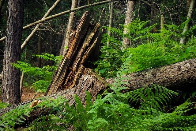 foresta carso moravo