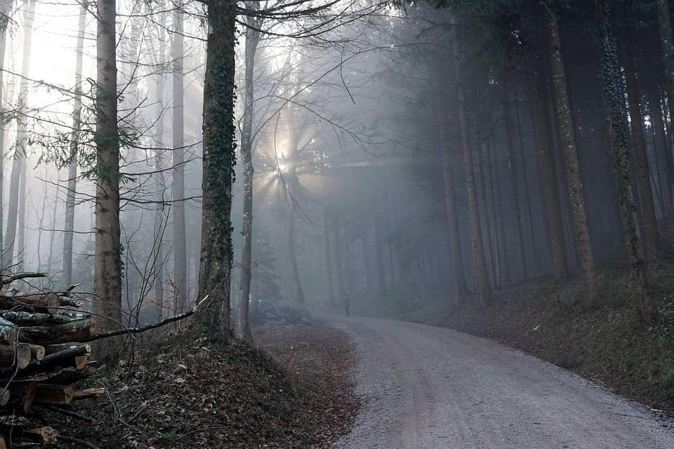 foresta zurigo