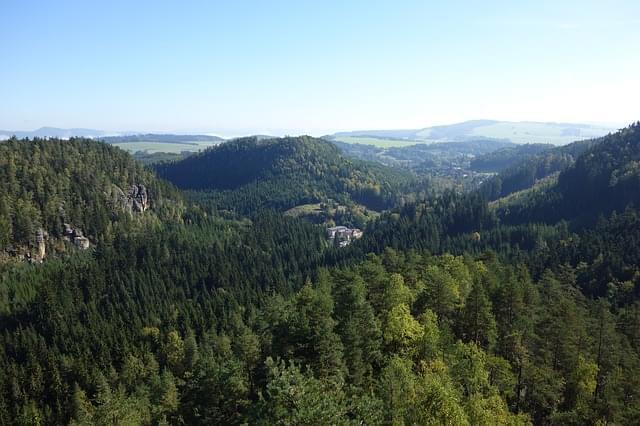 foresta alberi paesaggio vista