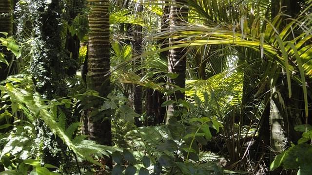 foresta amazzonica 1