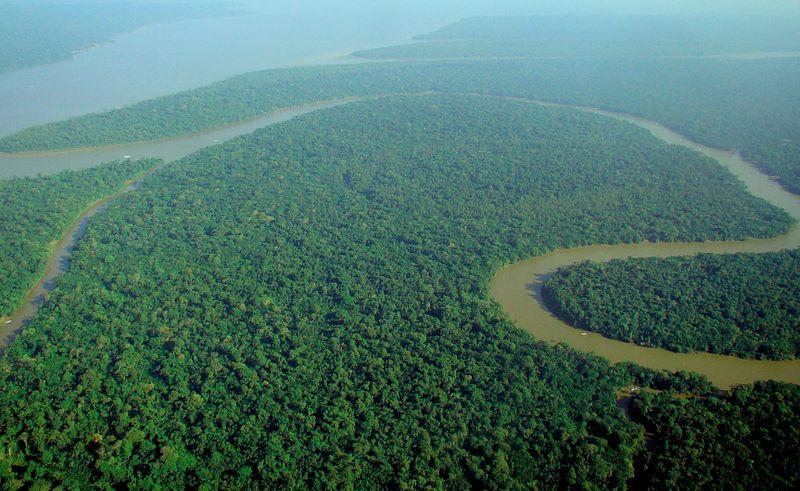 19 foresta amazzonica deforestazione