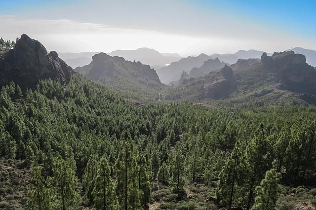 foresta isole canarie gran canaria