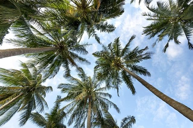 garden palms