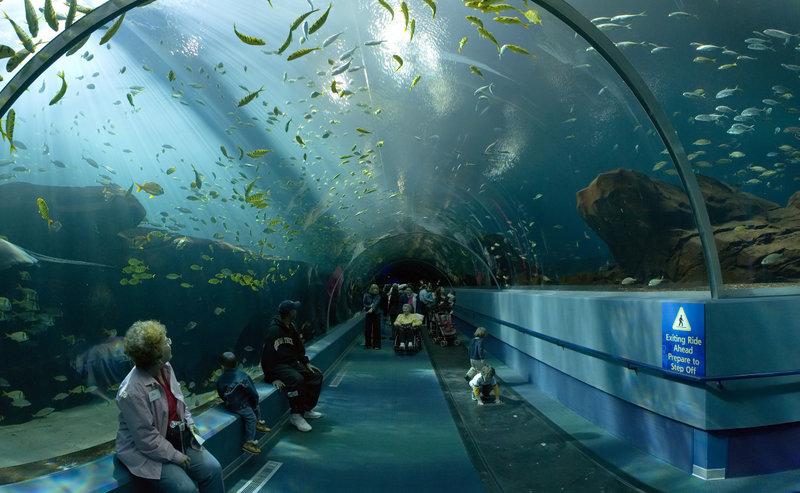 07 georgia aquarium