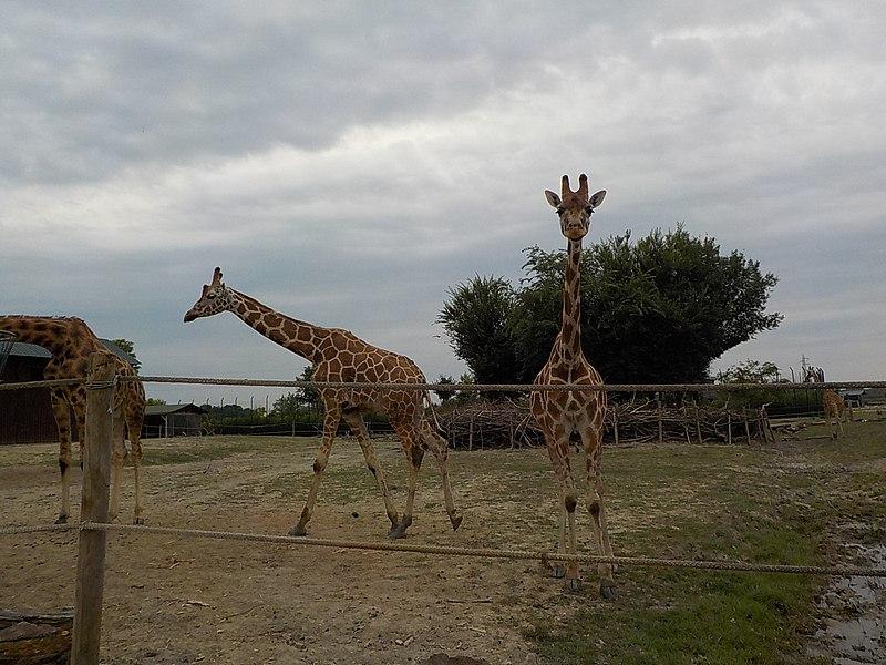 Safari di Ravenna