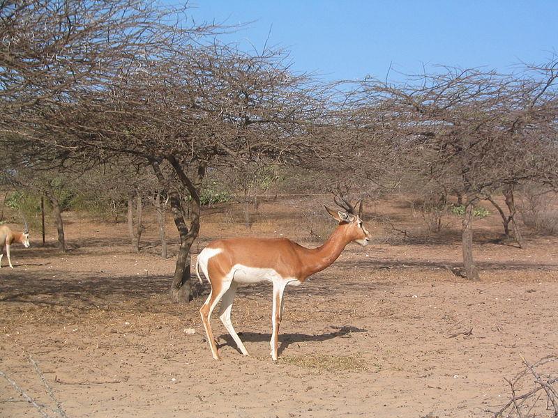 riserva naturale Guembeul