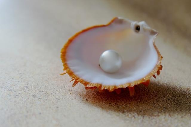 guscio strandperle spiaggia sabbia 1