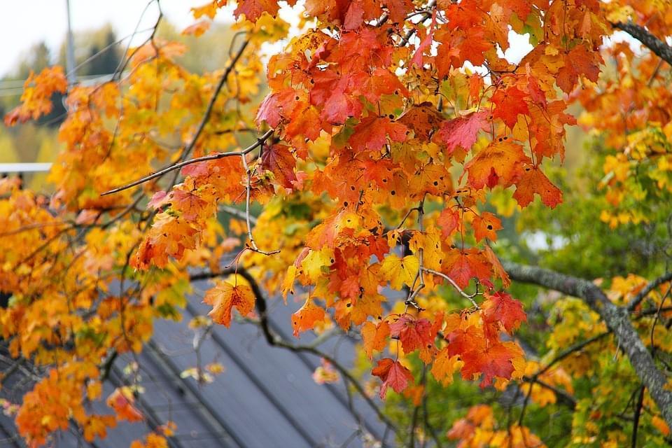 helsinki autunno