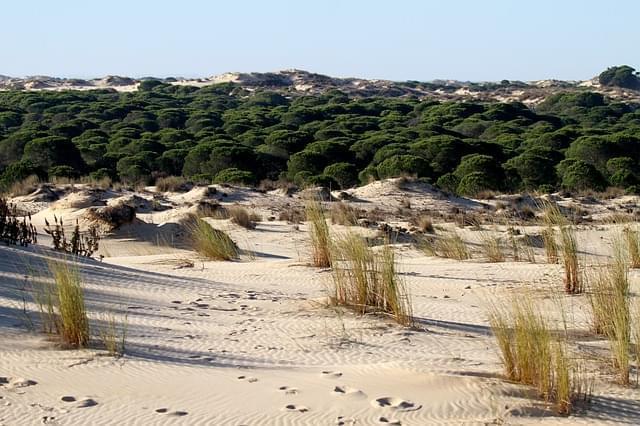 il parco nazionale di donana spagna 1