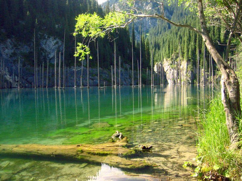 La Foresta sommersa, lago Kaindy, Kazakistan