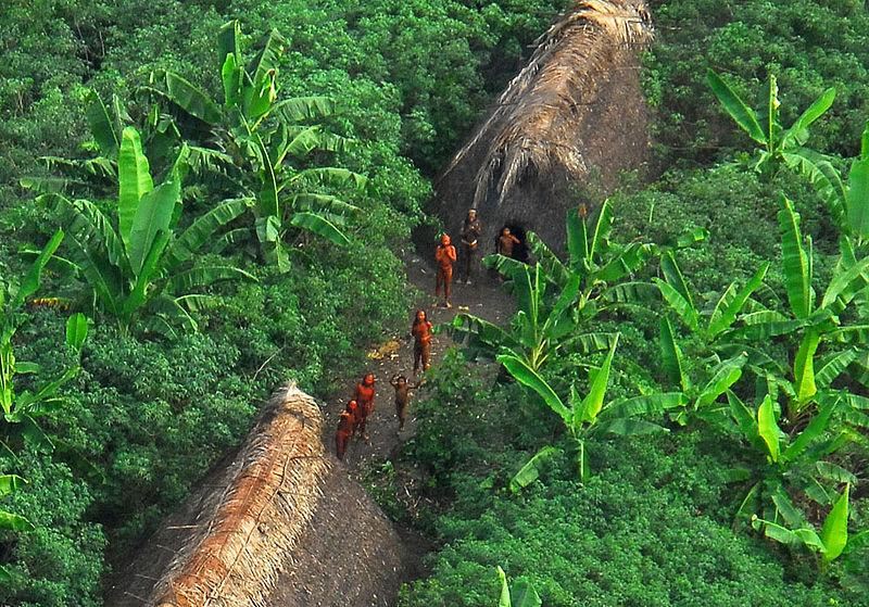 Vale do Javari, Brasile