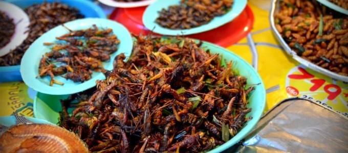 Thailandia: 5 buoni motivi per mangiare degli insetti