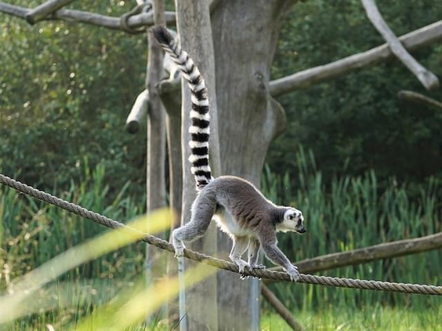 lemure nosy be madagascar