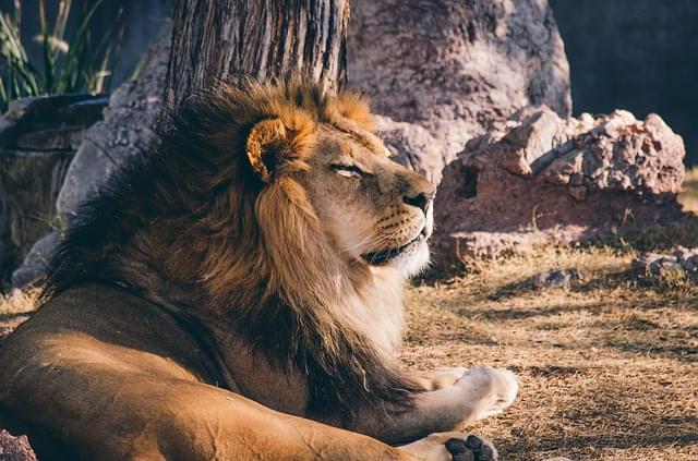 leone zoo 6