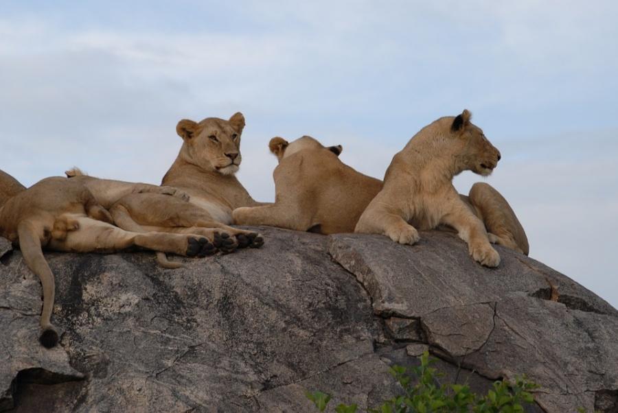 leoni in tanzania