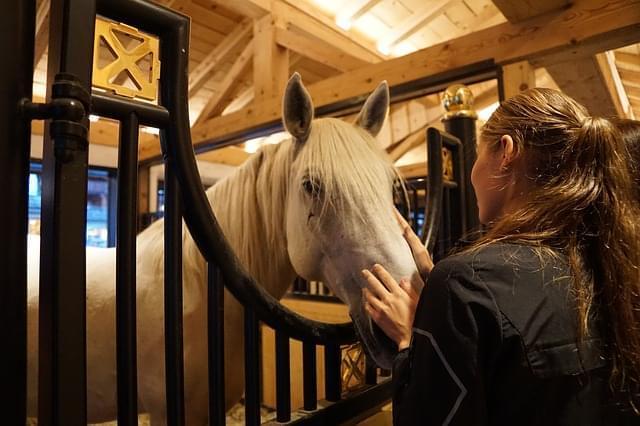 lipizza cavalli slovenia