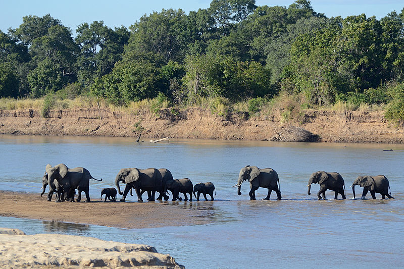 /foto/luangwa river crossing