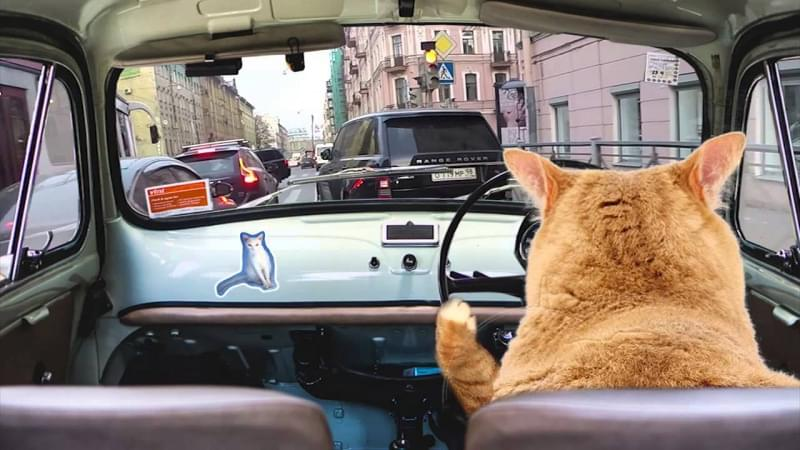 Trasporto in macchina
