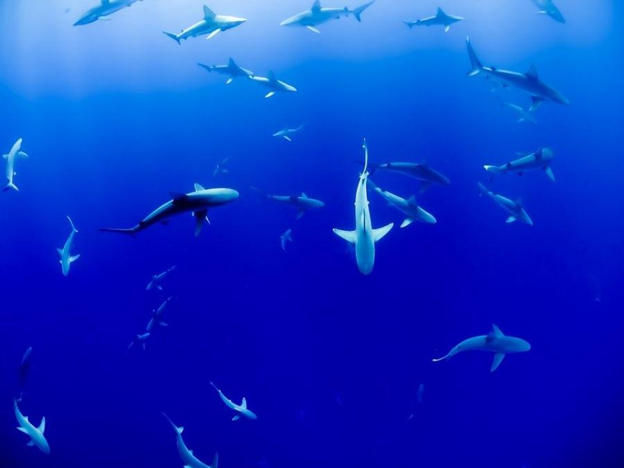 maldive pesci snorkeling
