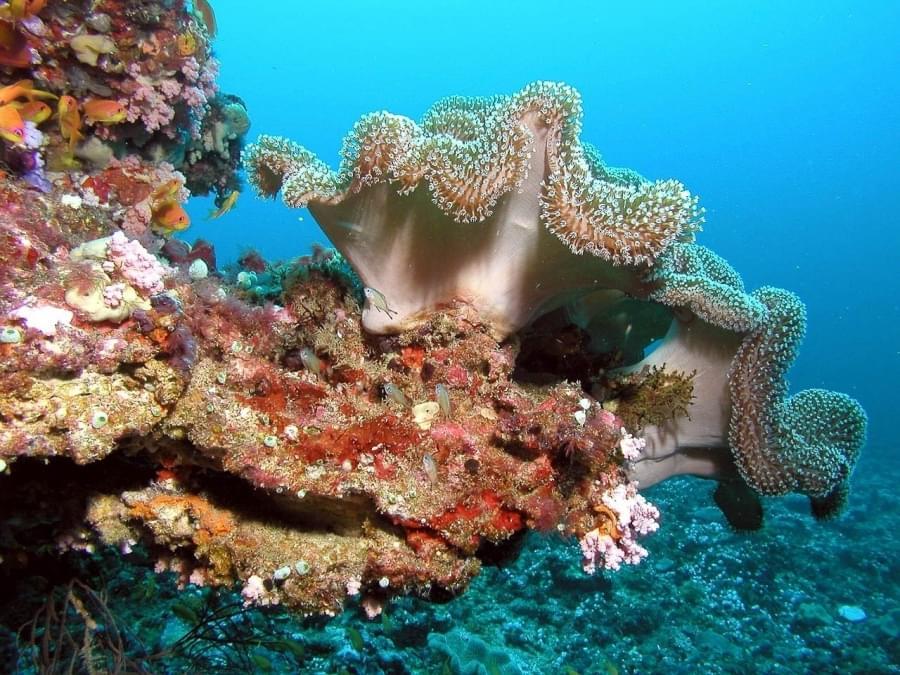 barriera corallina delle maldive