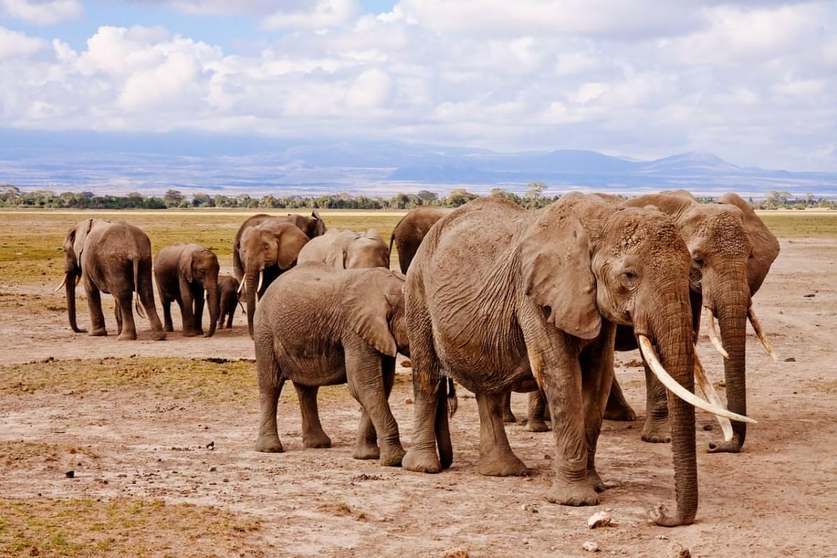 malindi kenya safari elefanti