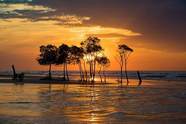 mangrovie isole tiwi australia