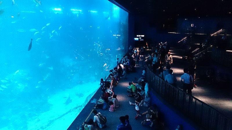 04 marine life park