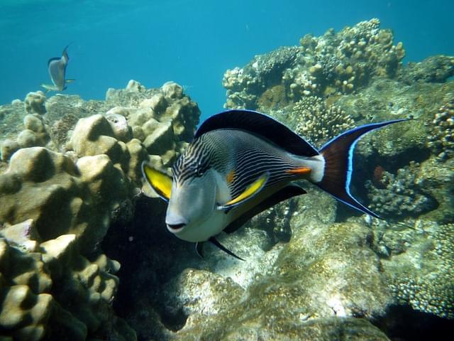 pesce pagliaccio fondali marsa alam