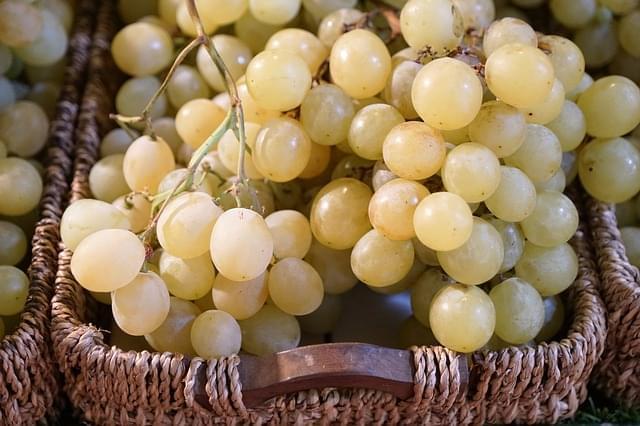 medoc vino francia
