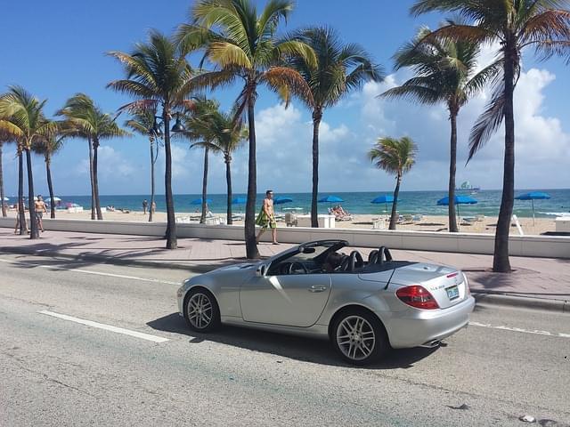 miami beach palme