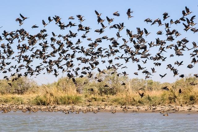 migrazioni in senegal
