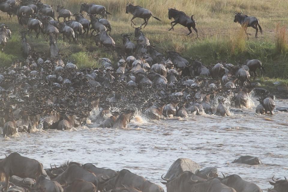 migrazioni masai mara kenya
