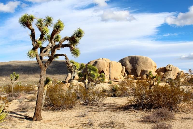 19 - Deserto del Mojave - 65.000 km²