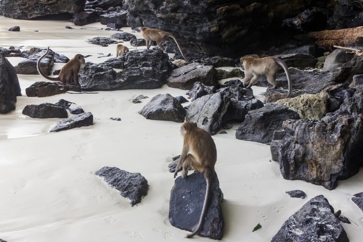 monkey_beach_phi_phi_don_island