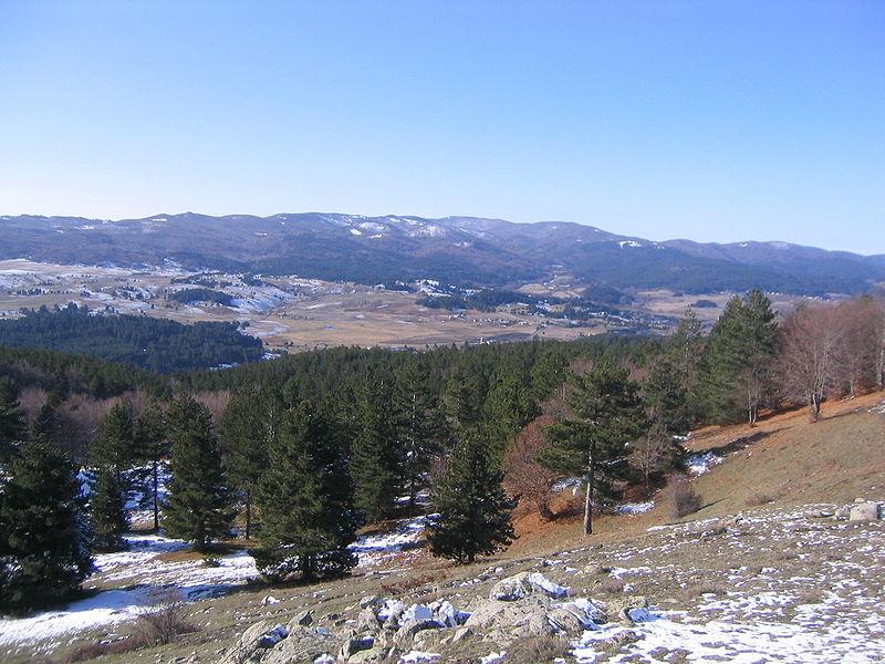 Bosco del Parco Nazionale della Sila