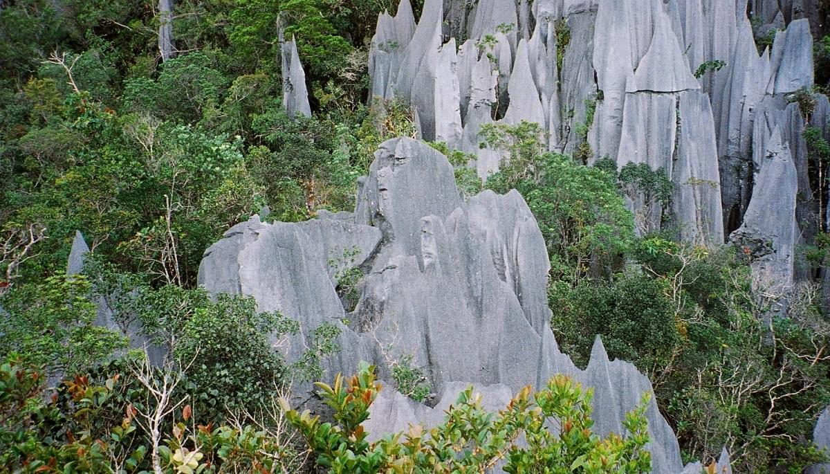 mulu national park malesia