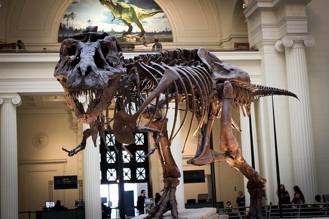 scheletro tirannosauro al museo zoologia di modena