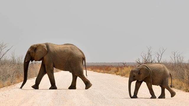 elefanti in namibia