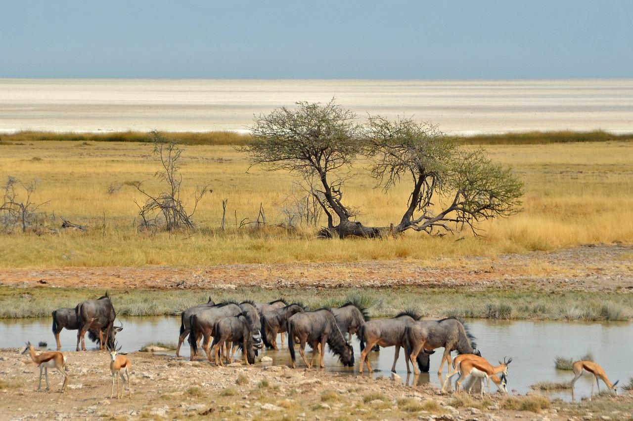 namibia migrazione gnu