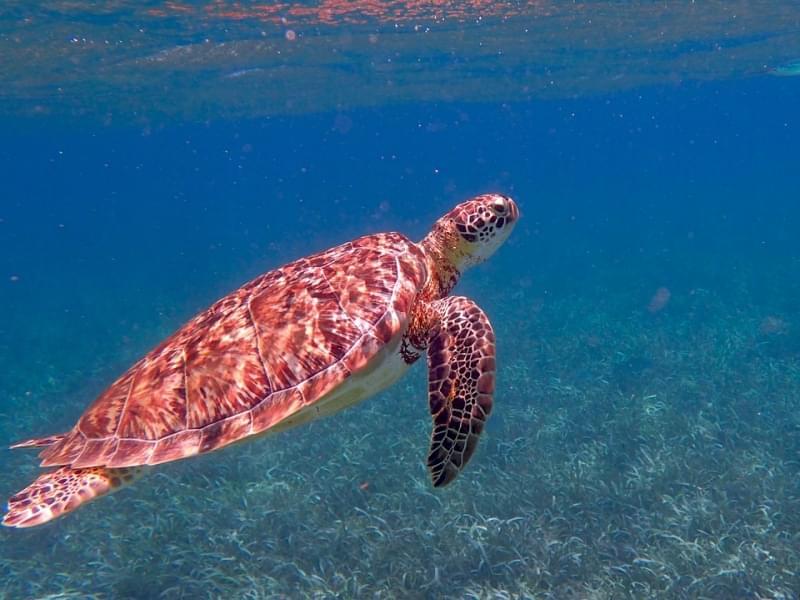 nei tropicali mari del belize fate conoscenza con la fauna ittica