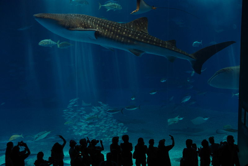 15 okinawa churaumi aquarium