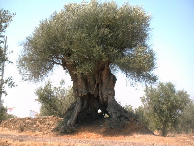 oliveira portogallo