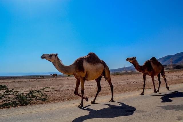 oman deserto 1