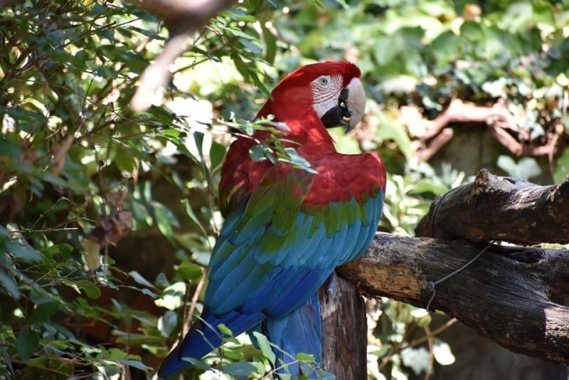 pappagallo giardino zoologico di pistoia