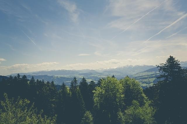 parco naturale Migliarino panorama