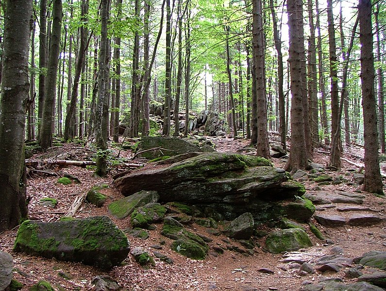Parco Nazionale della Foresta Bavarese, Germania