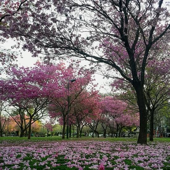 parque urquiza rosario