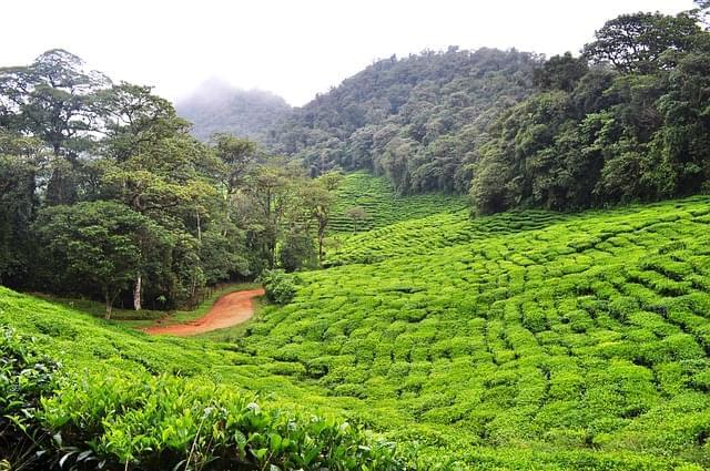 piantagioni the colombia